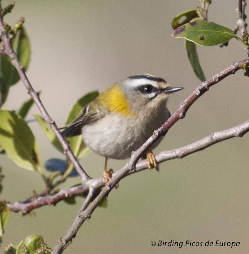 Carpinteros y aves forestales