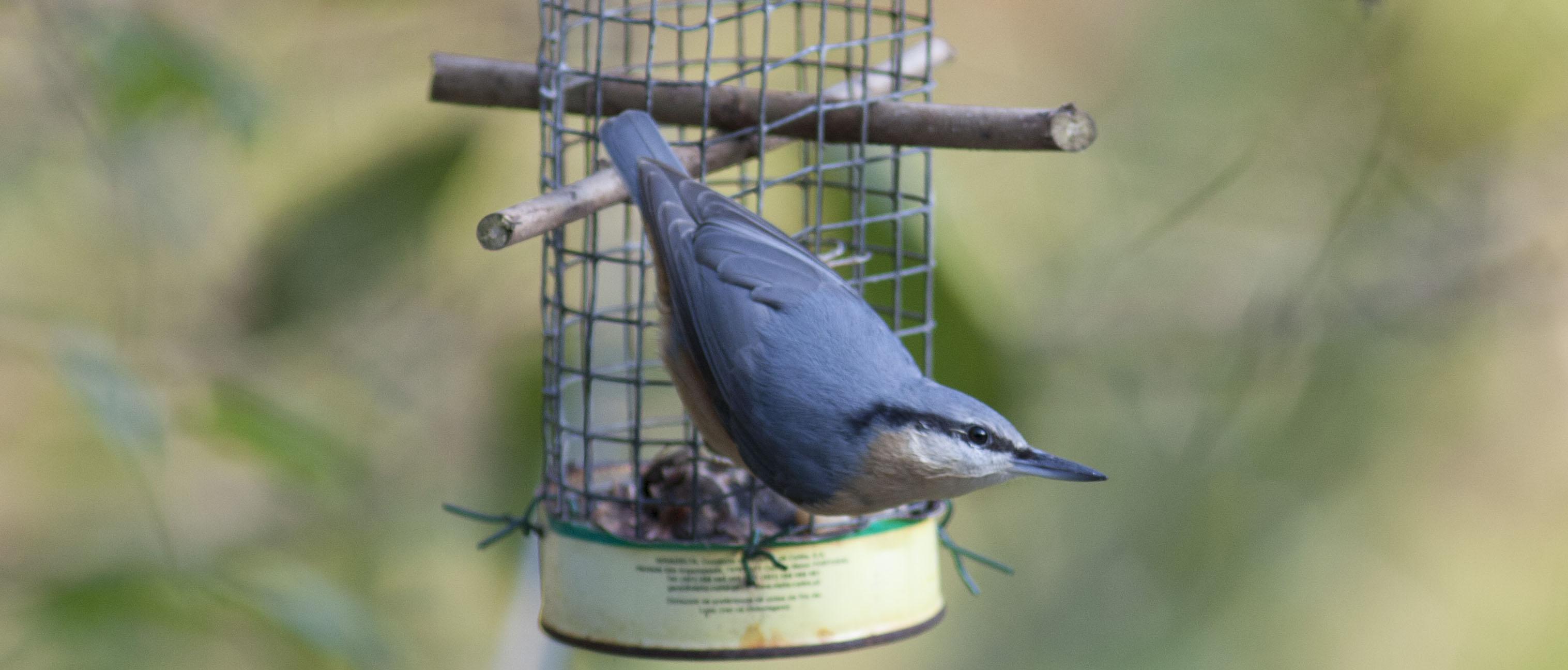 Taller «Comederos para aves silvestres»