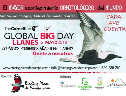 The Global Big Day. El mayor acontecimiento ornitológico del mundo en Llanes.