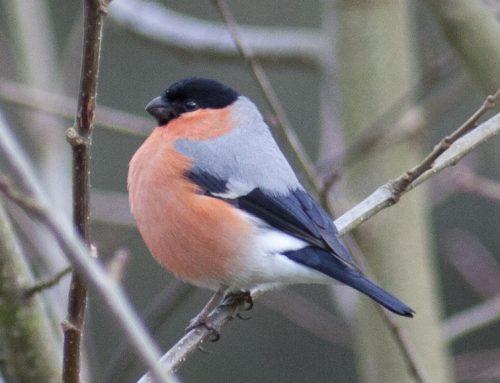 Paseos Ornitológicos. Semana Santa 2019