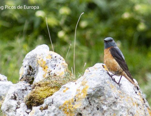 Wildlife in the Picos de Europa