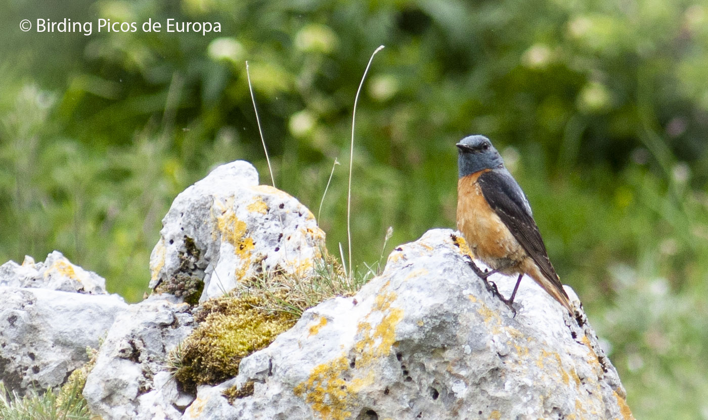 Wildlife in the Picos de Europa