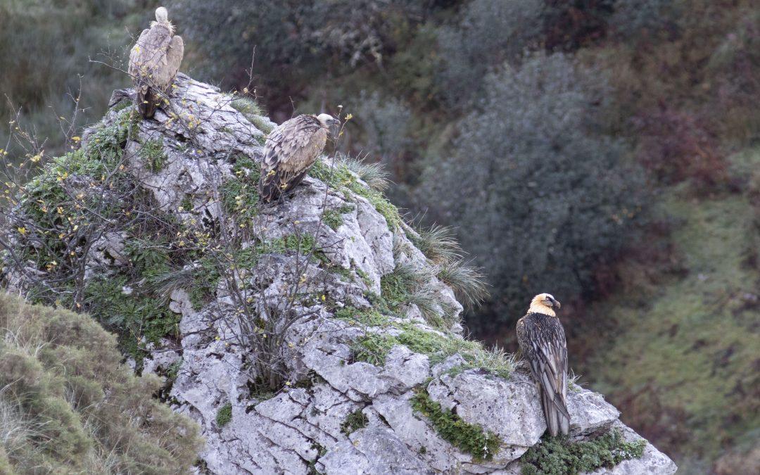 Picos de Europa Birding Tour