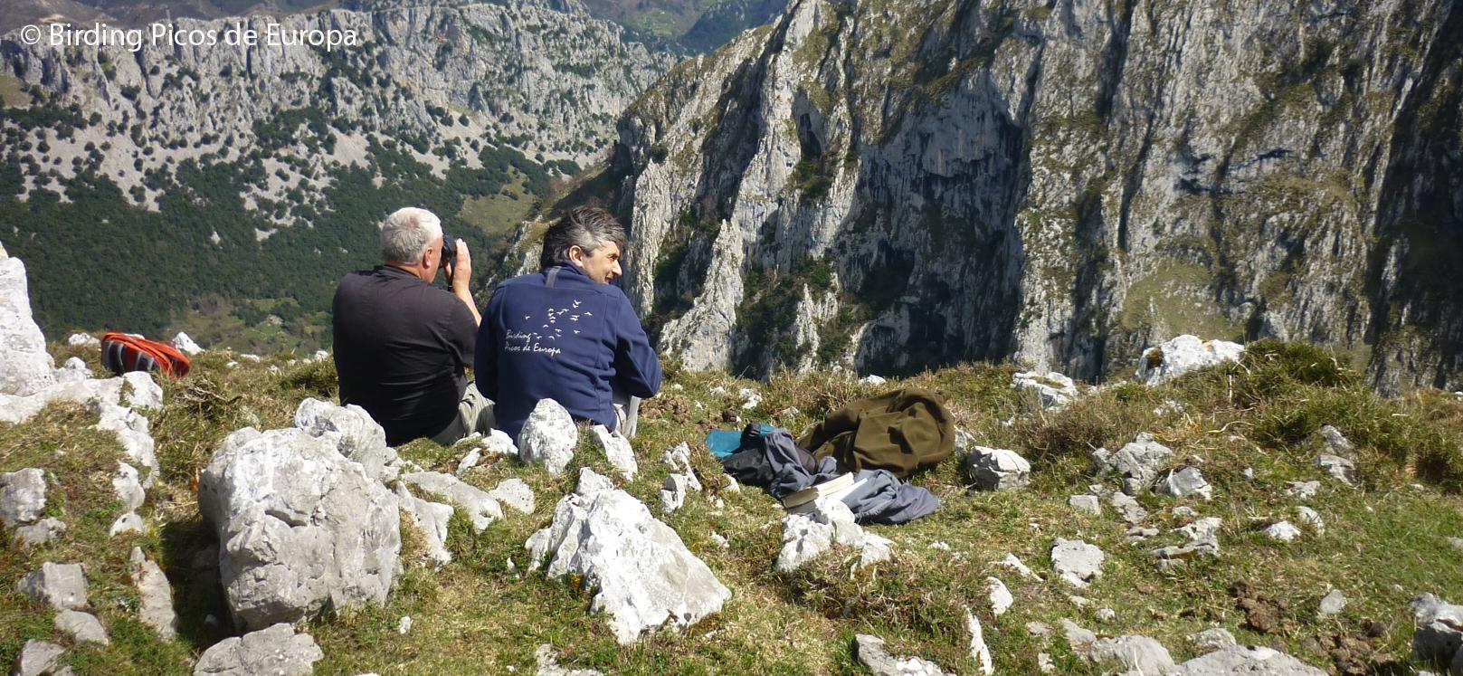Birding Picos de Europa